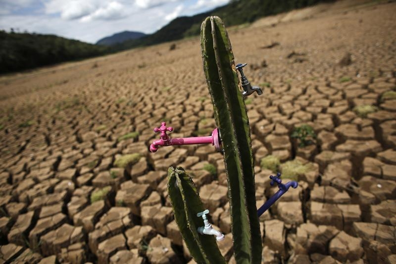 "Drought-related cactus installation called ""Desert of Cantareira"" by Brazilian artist and activist Mundano is seen at Atibainha dam"